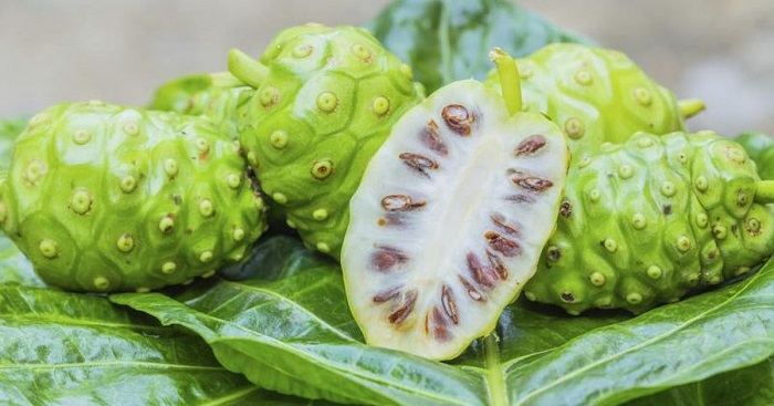 Noni Fruit Benefits