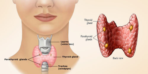 Regulation of the Thyroid