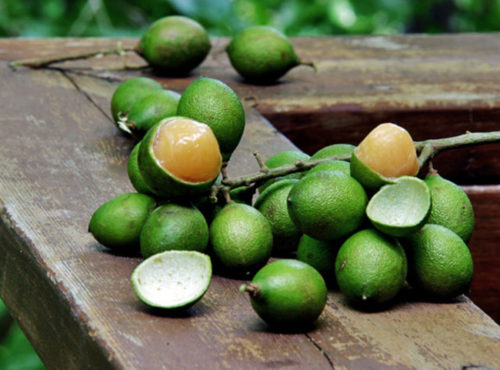 Quenepa Fruit and Its Amazing Health Benefits