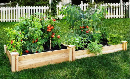 You Should Grow these Vegetables in your Home