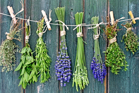 These Herbs Promote Brain Health!