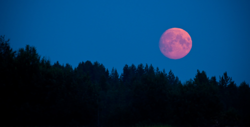 There is a Pink Full Moon in April
